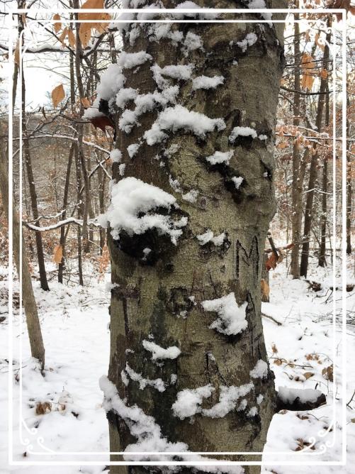 winter woods 10.jpg