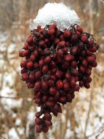 winter woods 3.jpg