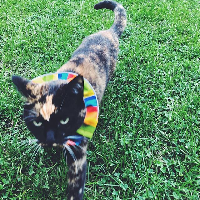 Chicago rainbow kitty!
