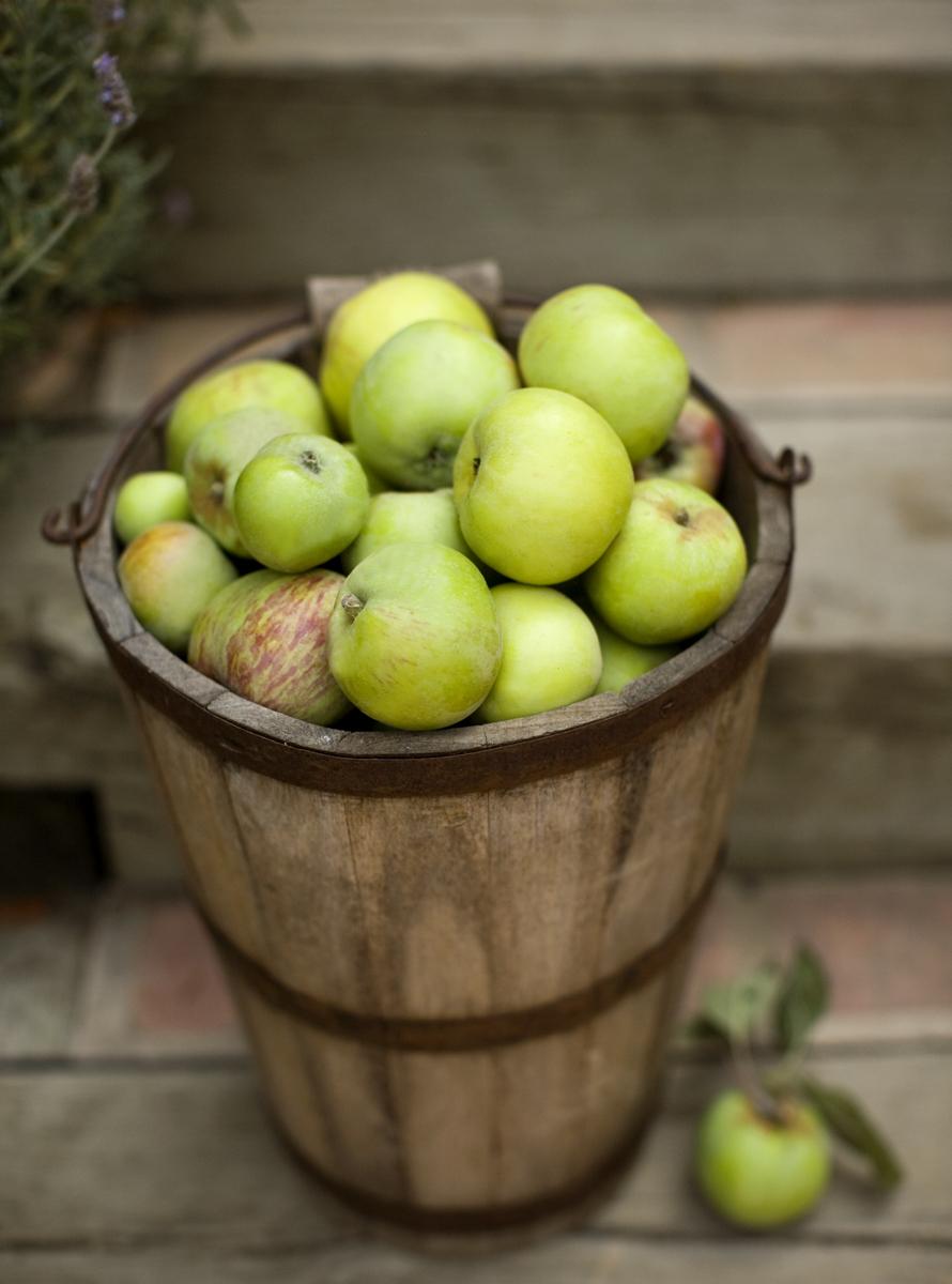 11_0_115_1remington_apples_39.jpg