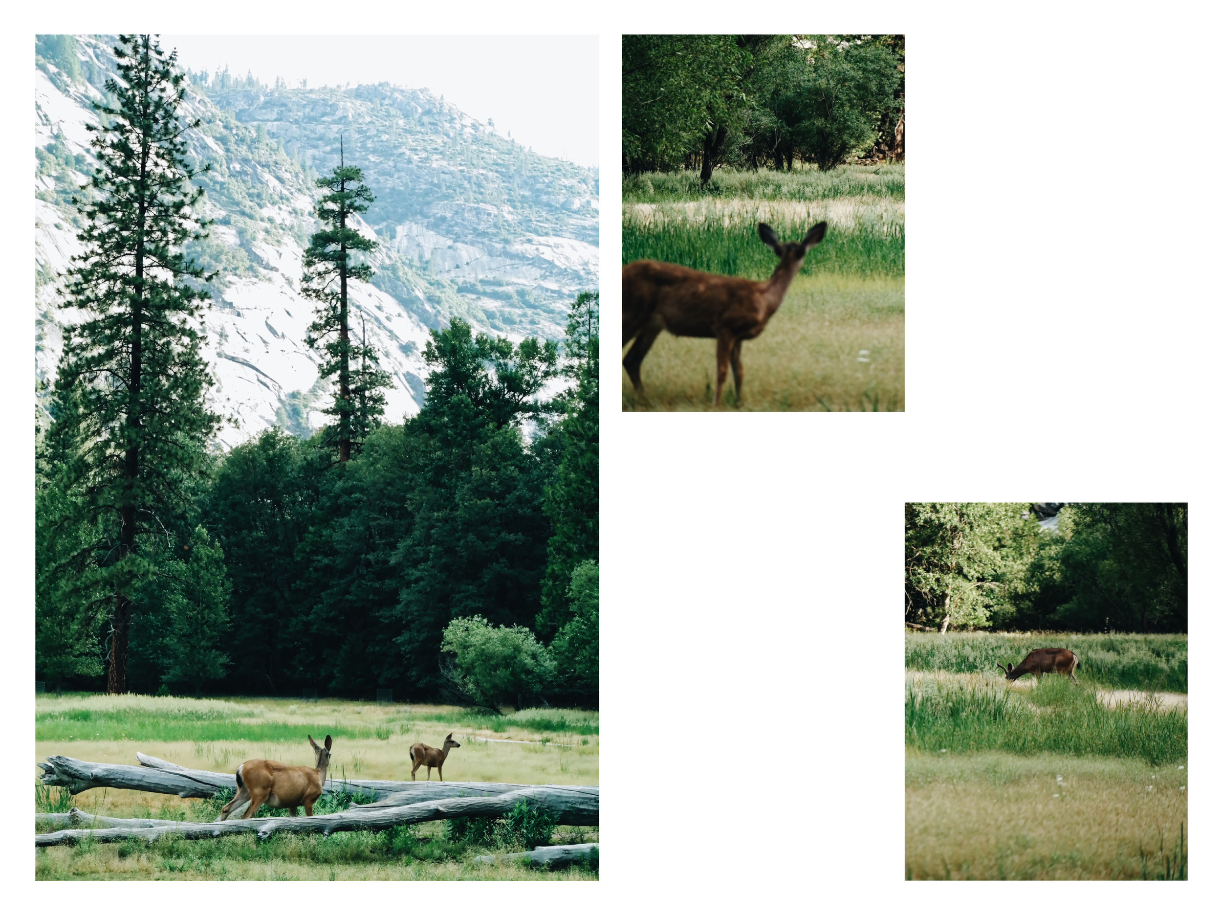 landscape-page-2.jpg