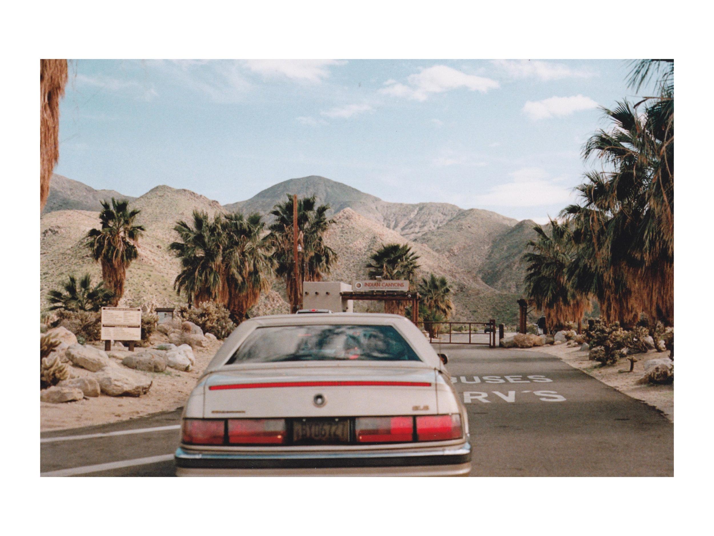 palmcanyonfilm.jpg