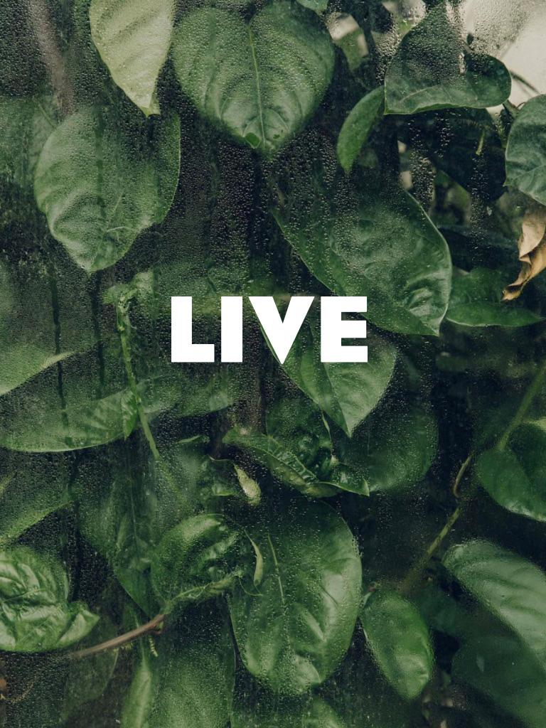 Made-estate-live.jpg