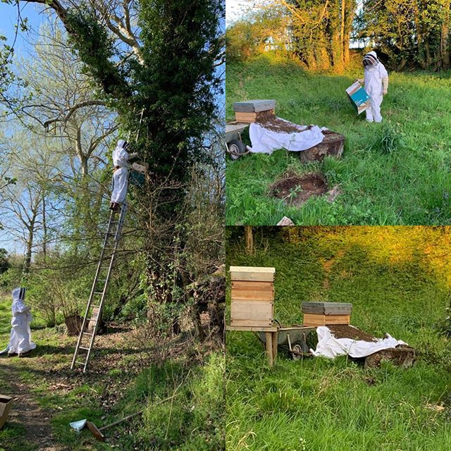 Today is world bee day and thought I should show you these. I can't take all the credit. Rhum @theclaphamcarpenter is a natural and doesn't believe anything is impossible. It's him up the tree and me helping the swarm into their new home where, three weeks later, they seem happy and well settled. Hopefully, we'll be able to extract some honey at the end of the summer. #ruralbliss #Suffolk #bedandbreakfast #thegoodlife #sustainableliving