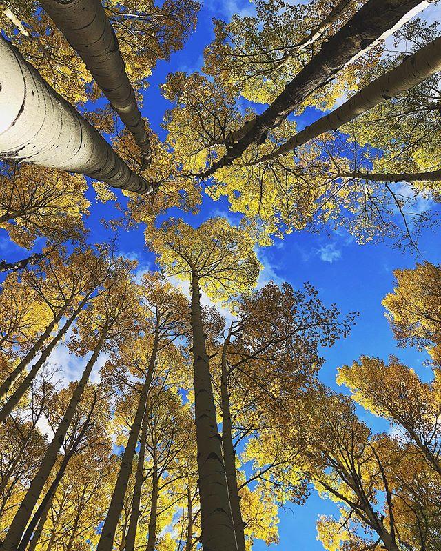 """Fall is proof that change is beautiful""🍁🍂 • • • • • #harvestingroots #connectwithnature #seasons #fall #embracechange #mindfulliving #getoutside #neature #aspens #arizona #highaltitude #grow #protectthesacred #sustainability #sustainableliving #breathe #freshair #leavenotrace #naturephotography #ecoblogger"