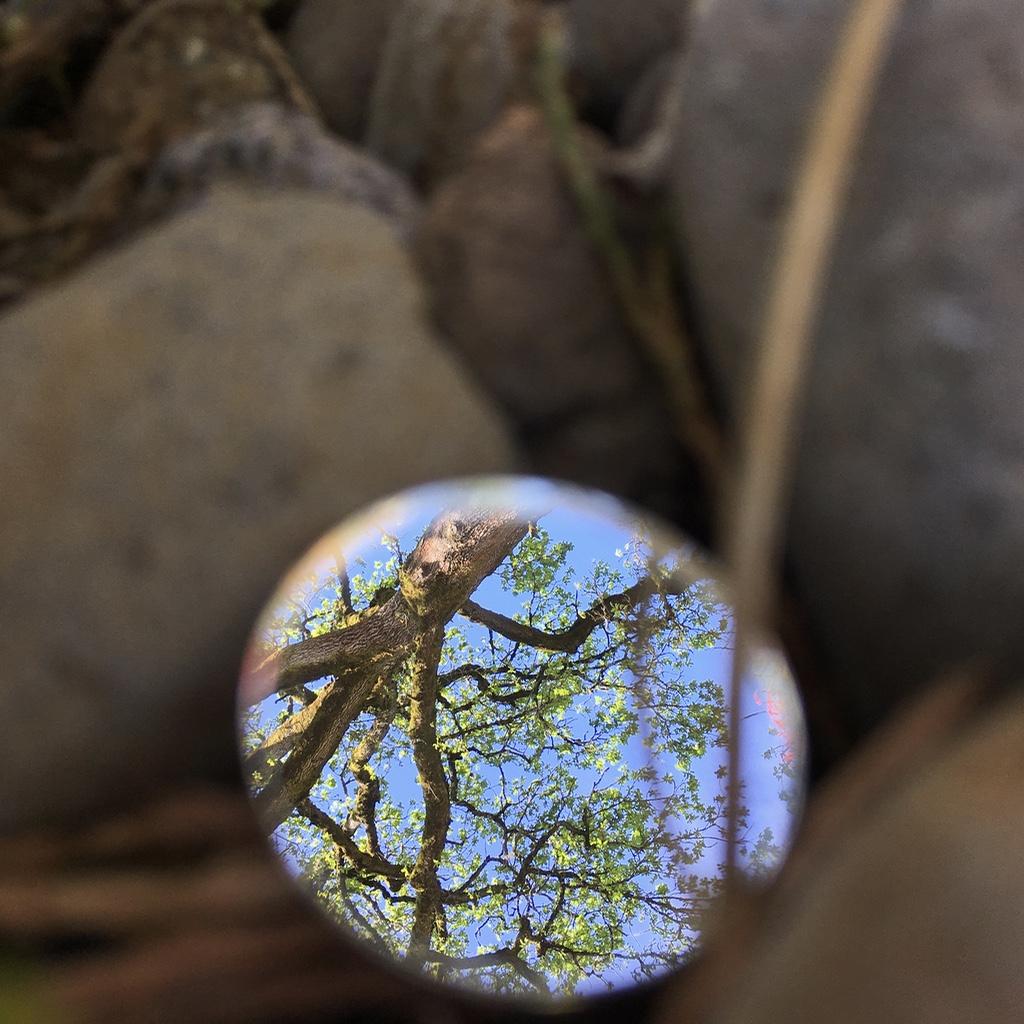 MirrorTrees.jpg