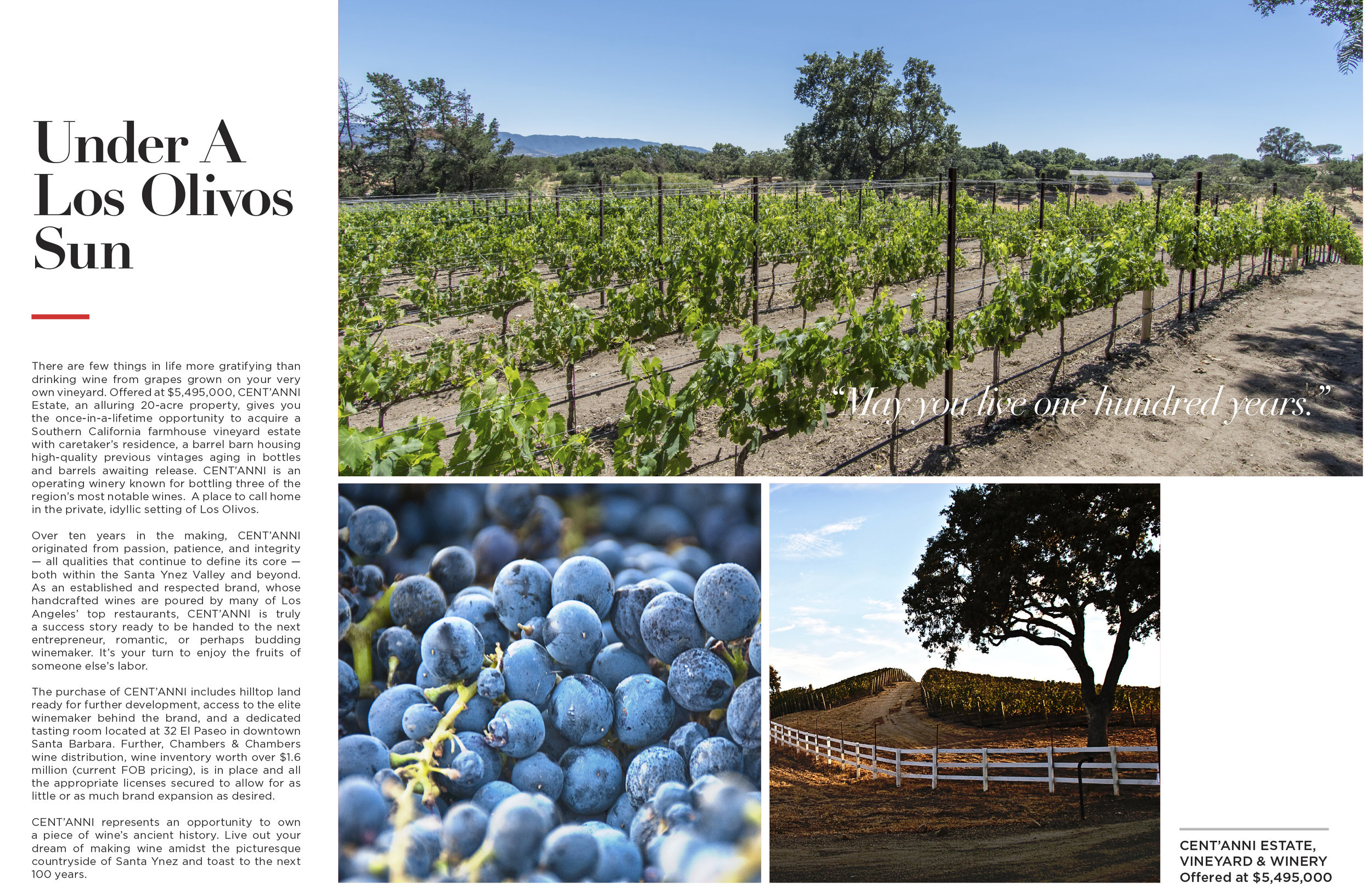Brochure_Centanni-Vineyard-V5-2.jpg