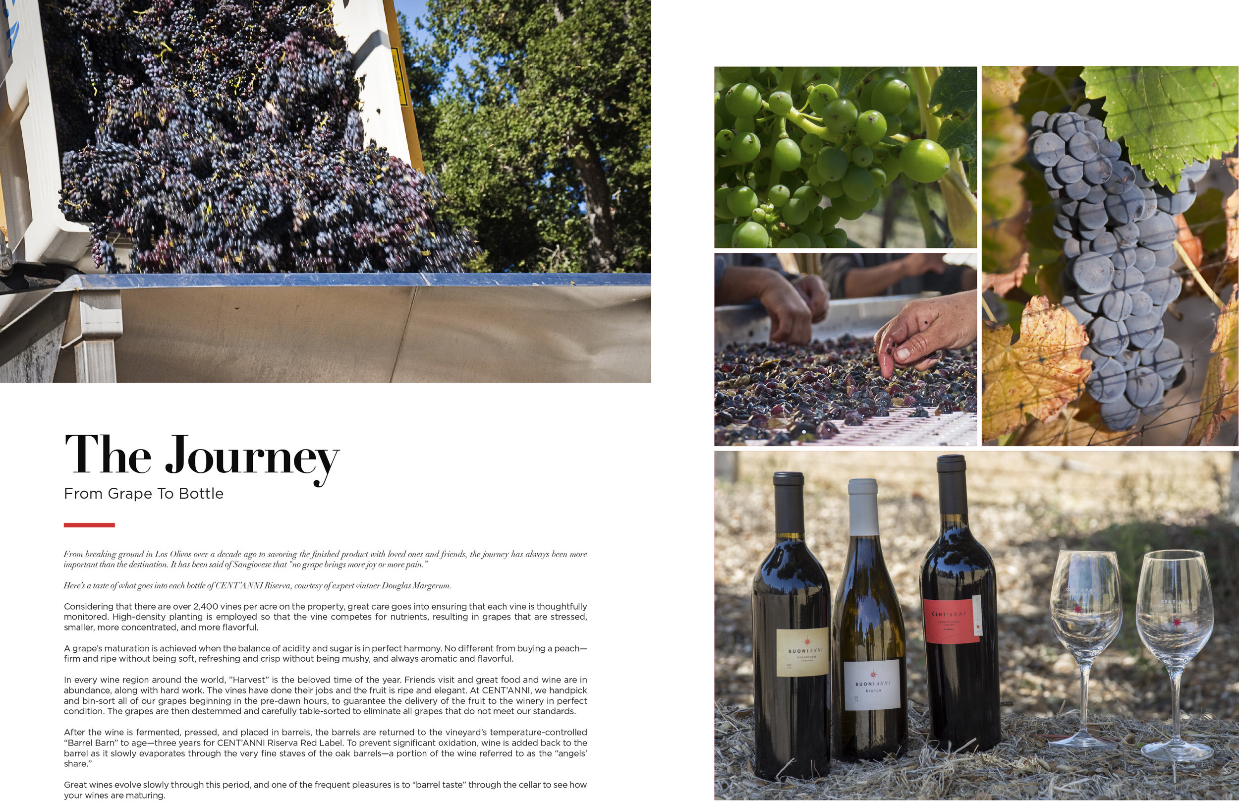 Brochure_Centanni-Vineyard-V5-9.jpg