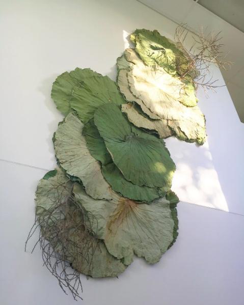 Bloodwood Botanica | Dried lotus leaf wall sculpture