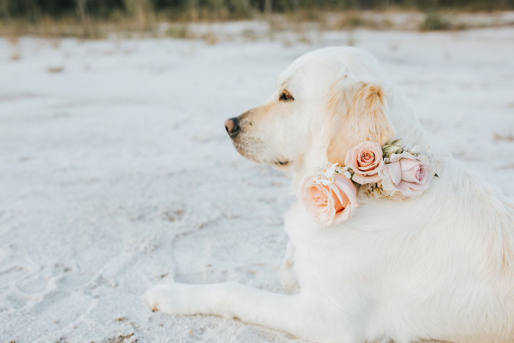 Bloodwood Botanica   Floral Dog Collar
