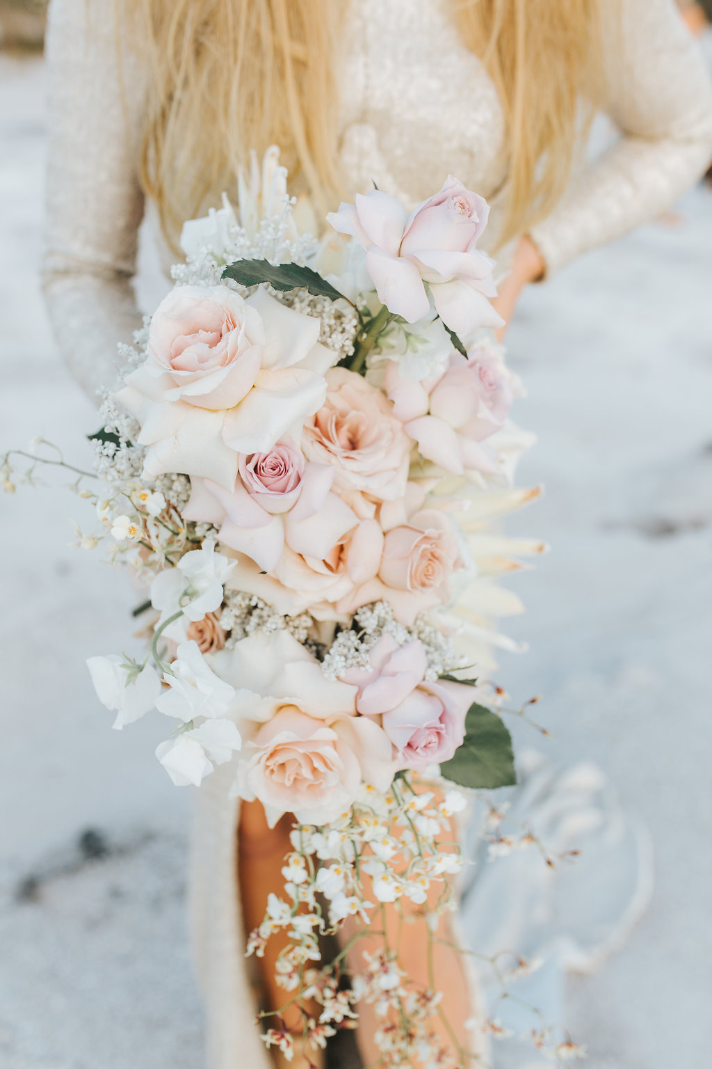 Bloodwood Botanica   Orchid Roses and King Protea wedding bouquet