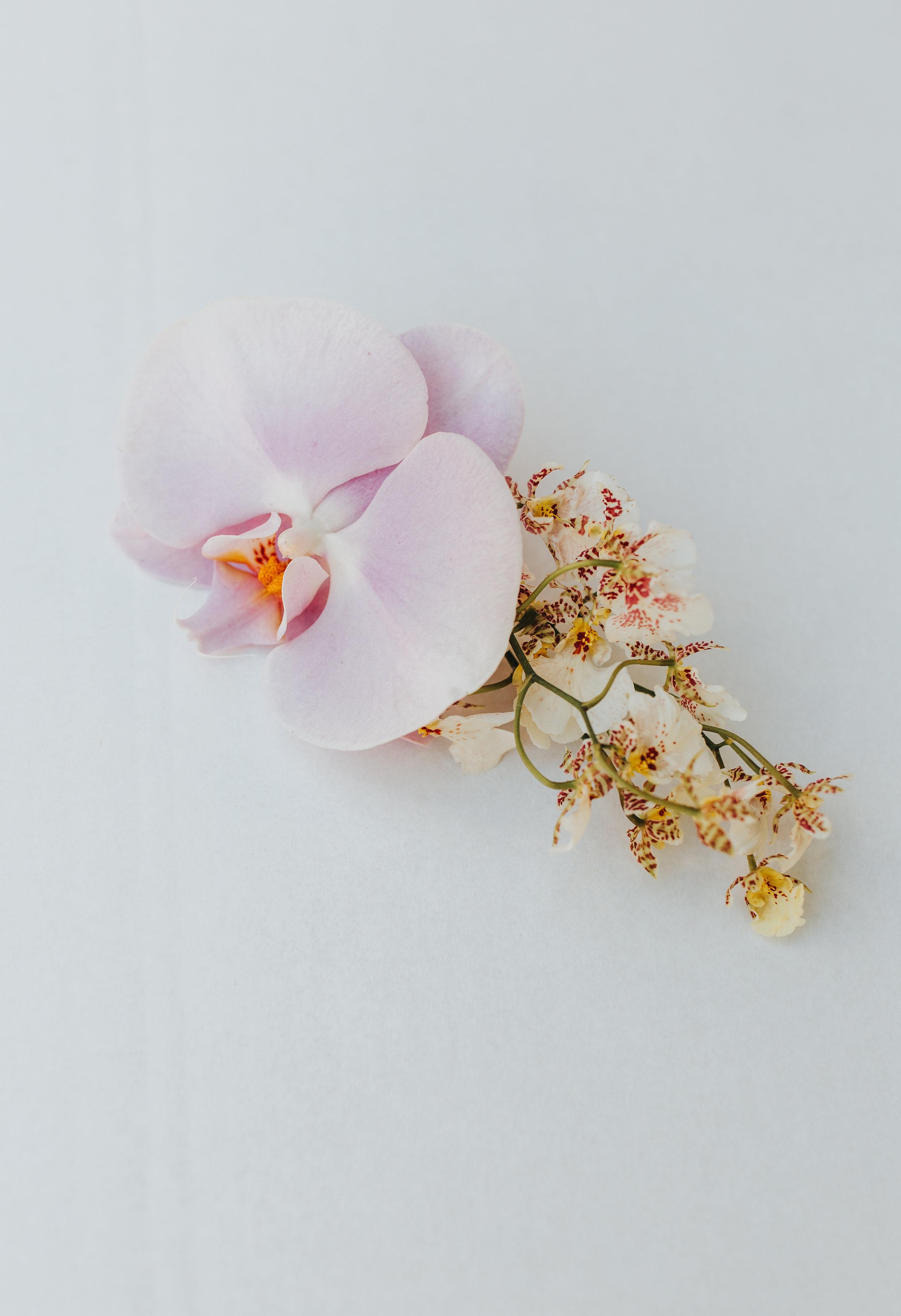 BLOODWOOD BOTANICA | Floral Hair piece