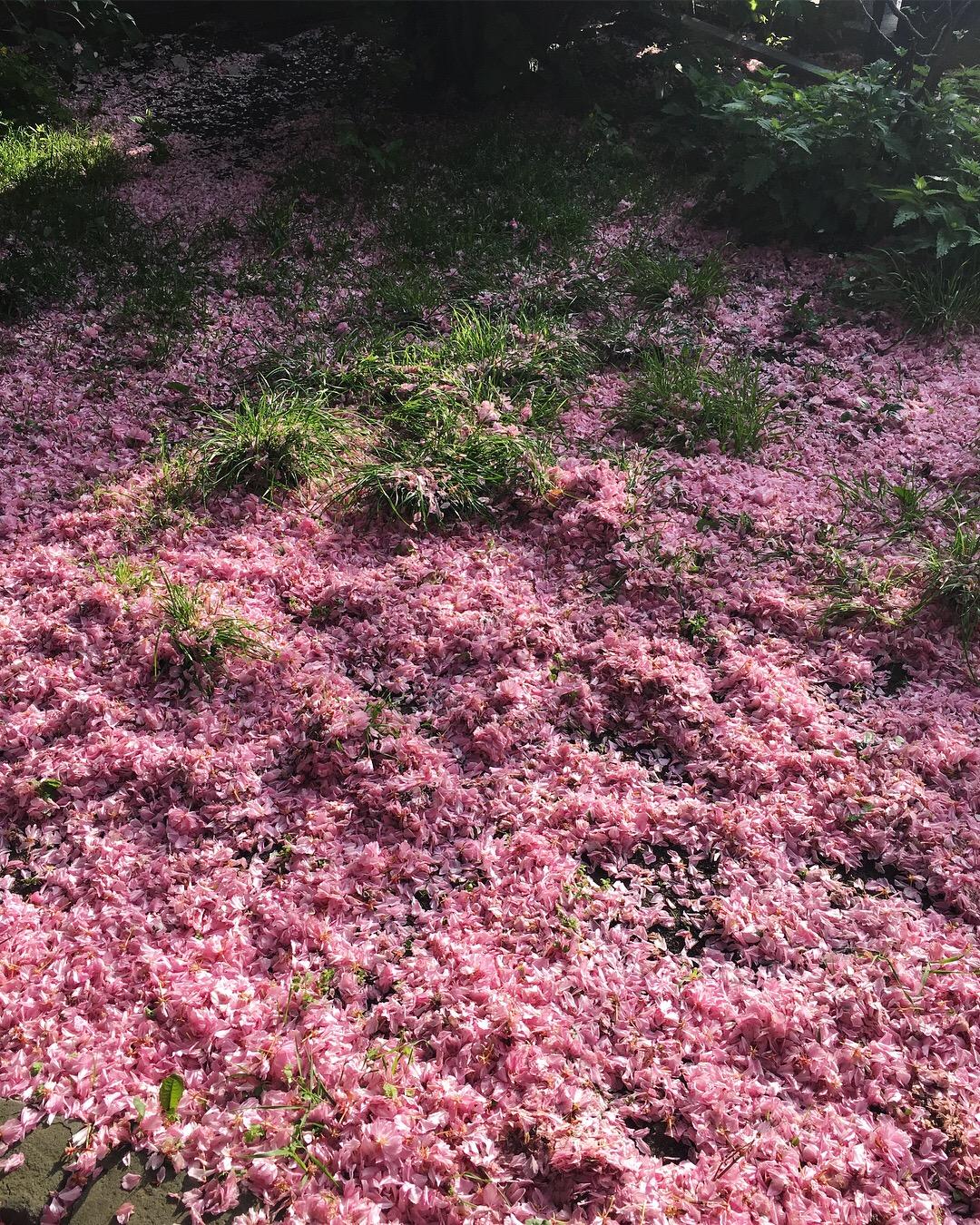 On the corner of Adalberstraße x Waldemarstraße, there is always a week of pink dust. Hope you'll see it in bloom!