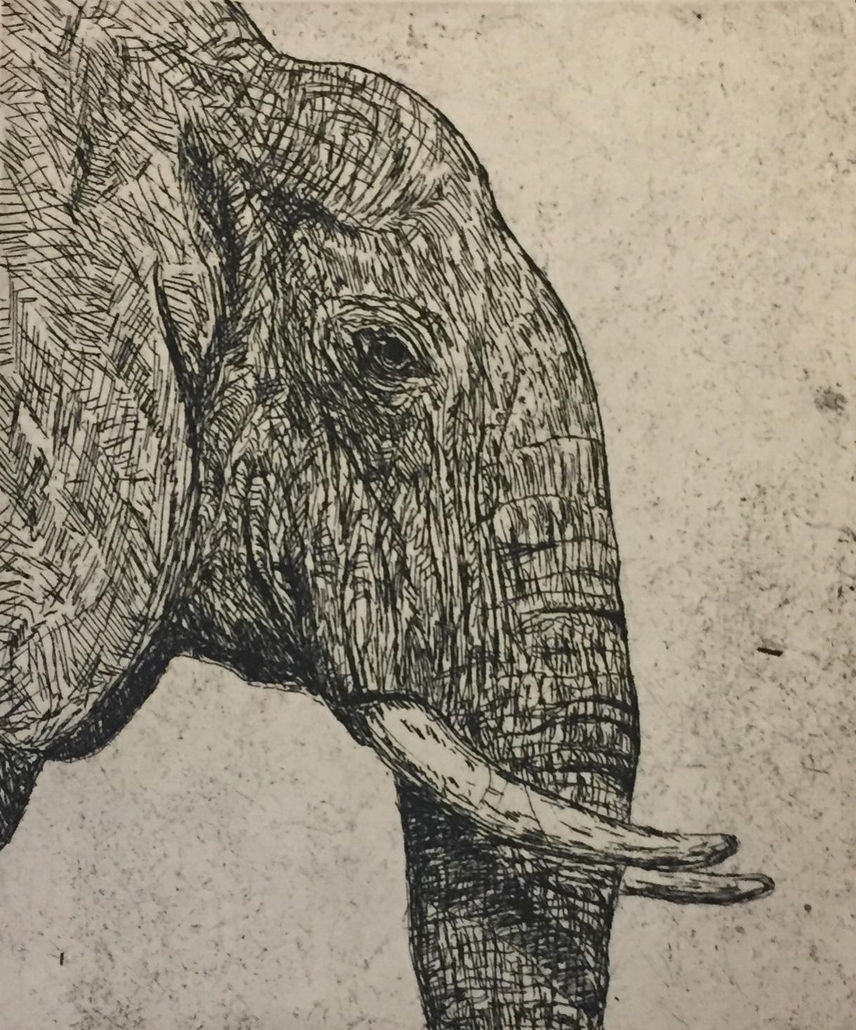 Elephant in Black