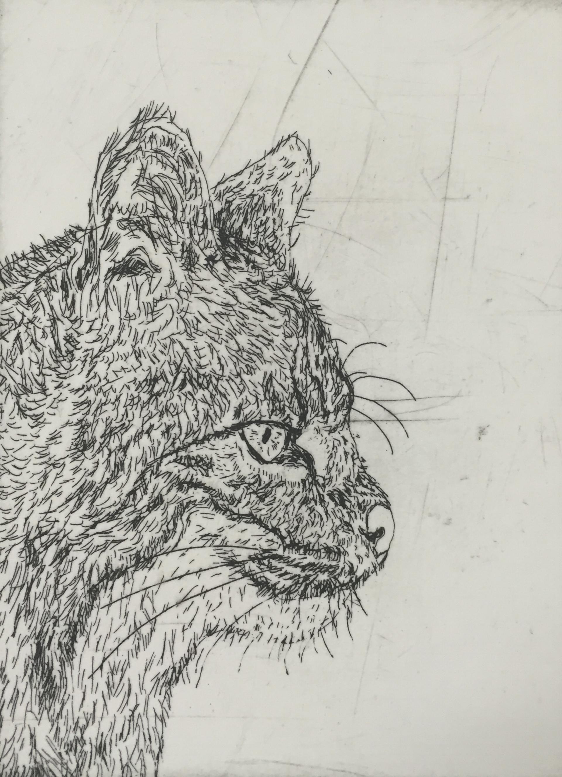Wildcat in Black