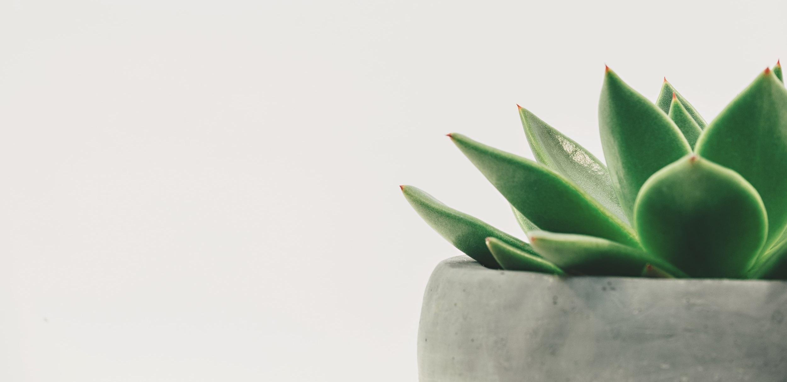 botanical-cactus-close-up-305821.jpg