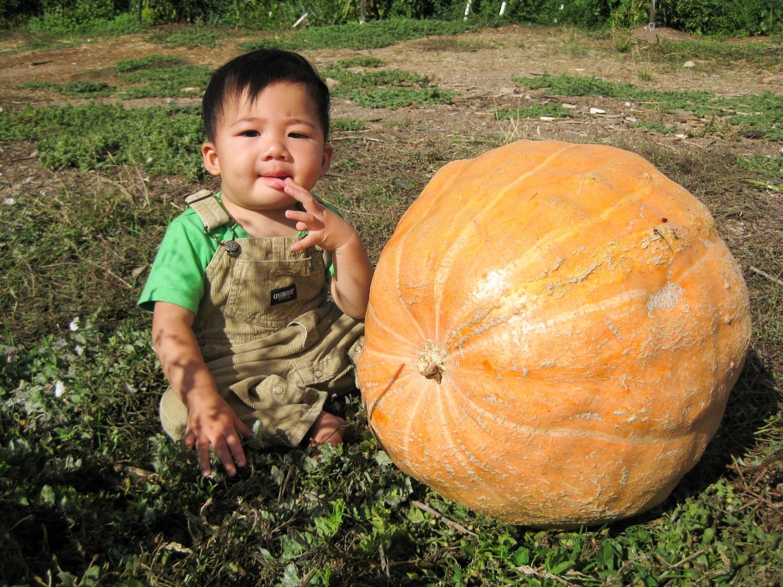 A giant pumpkin.