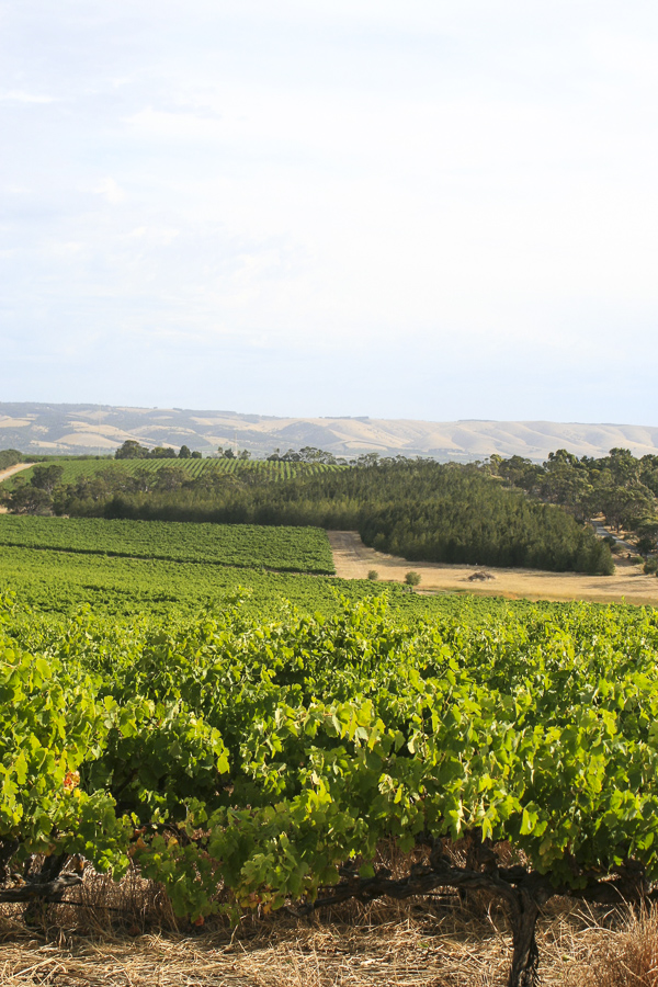 p113:2 Vineyards Fleurieu Peninsula-.jpg