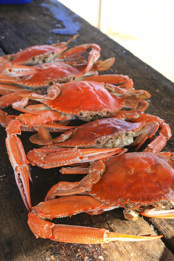 p141:4 Cooked Crabs-.jpg
