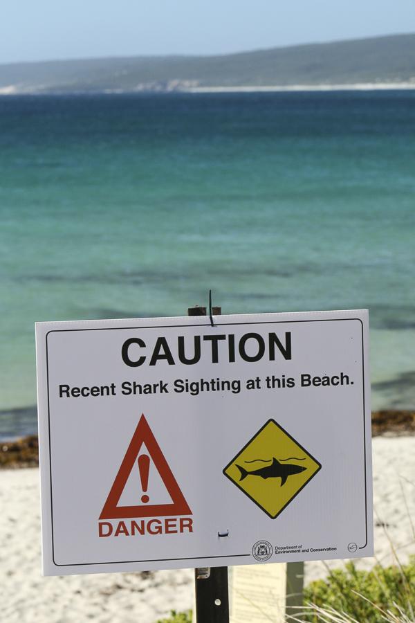 p189:3 Shark Sign Hamelin Bay-.jpg