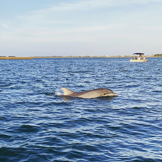 Are you friends with ze dolphin? Does he call you at home? #highpointsadventure #dolphin #bottlenosedolphin #follyriver #kayaking #charlestonsc #follybeach