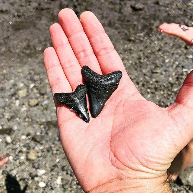 Shark tooth island. #highpointsadventure #sharkteeth #charlestonsc #hammockisland #paddleboarding #suplife