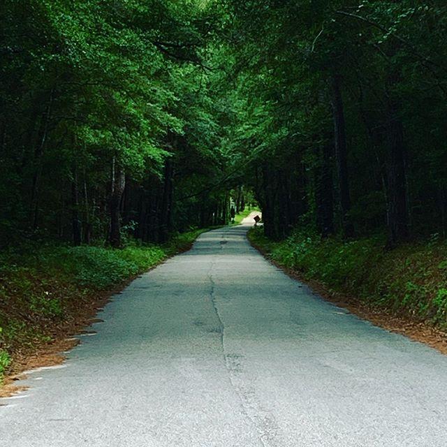 Lonely roads. #highpointsadventure #georgetownsc