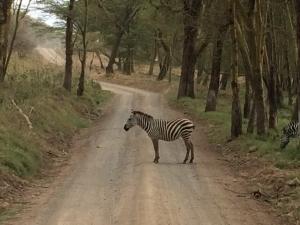 Stop - Zebra Crossing