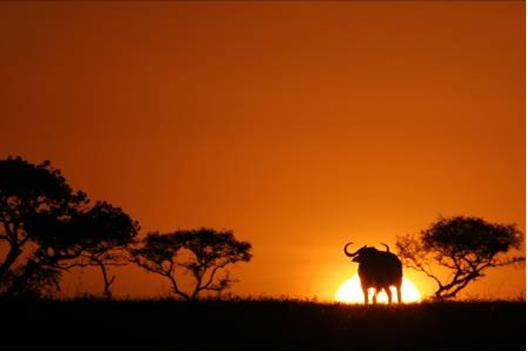 Perfect African sunset (Customised Tours to Africa)