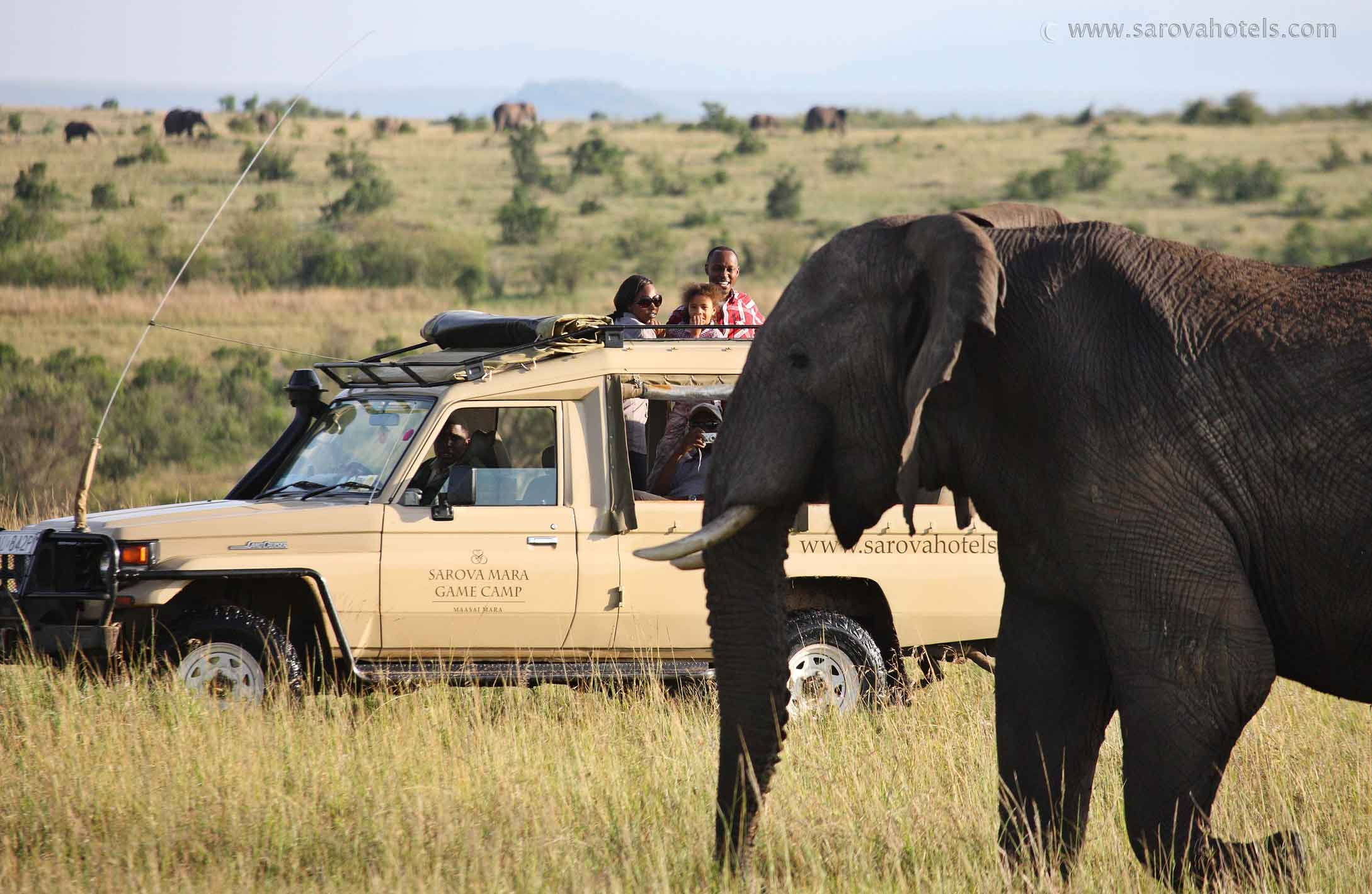 Up close on Safari (Customised Tours to Africa)