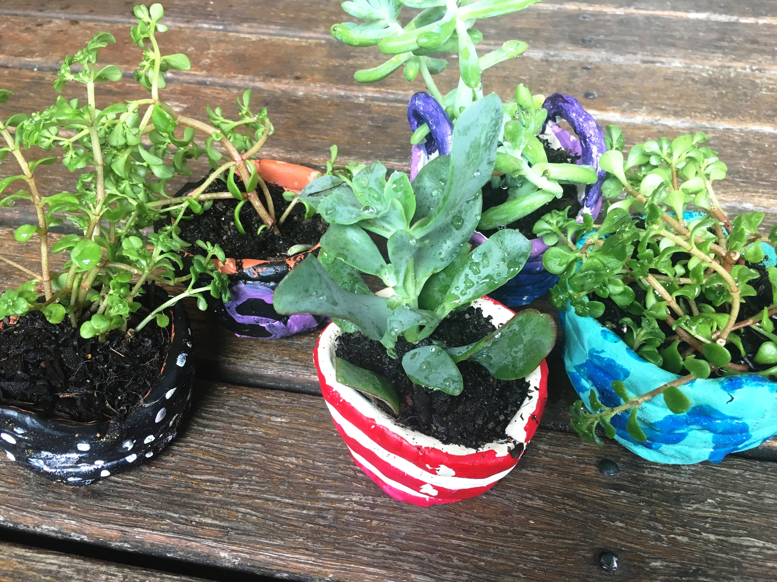 Ltp pot plants 1.jpg