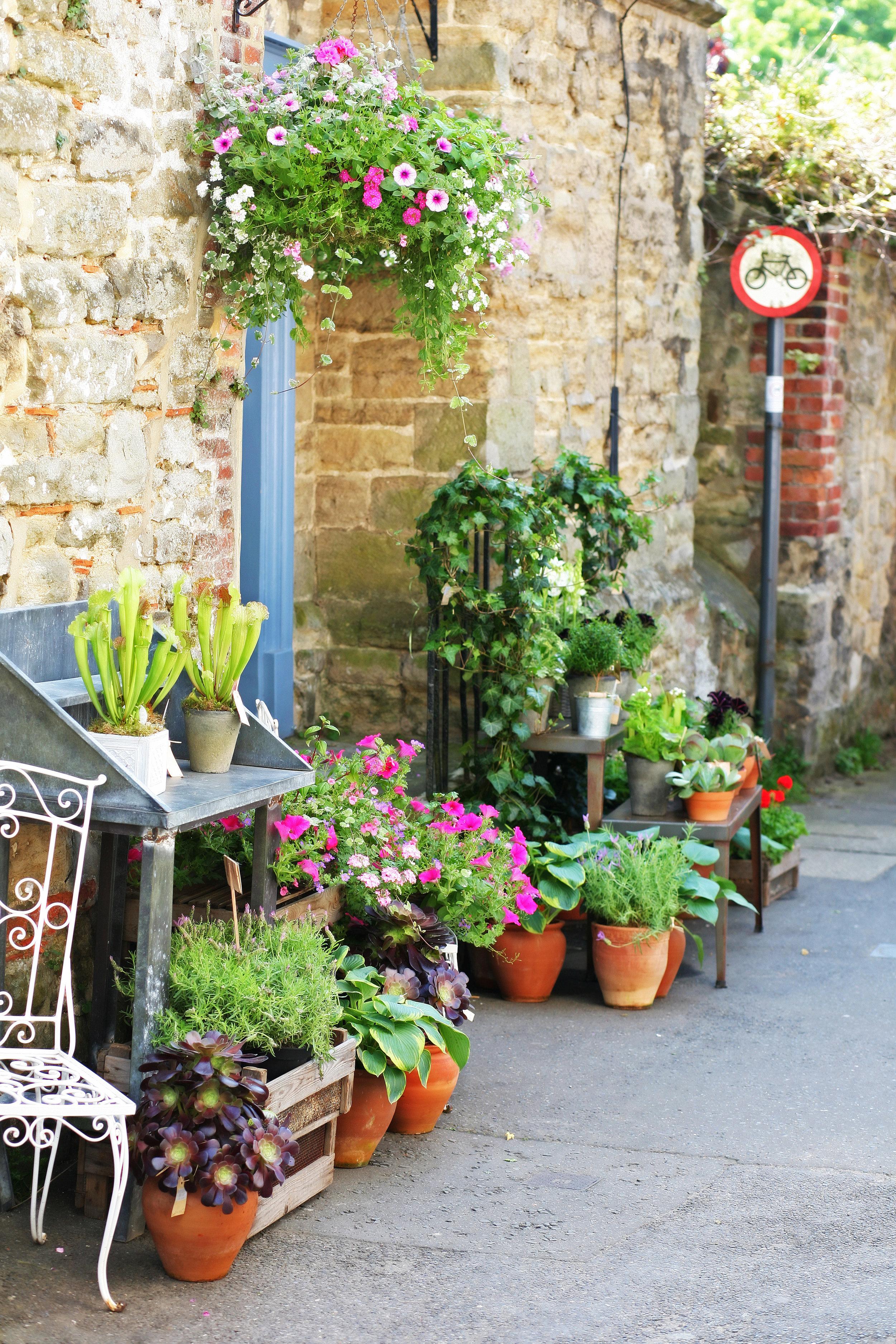 Garden centre .jpg