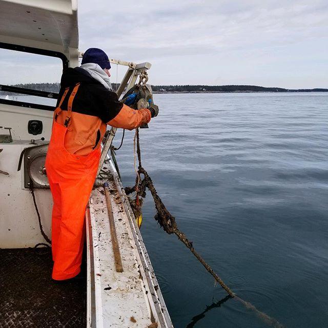 #fishingandfarming  #maineaquaculture  #scallopaquaculture