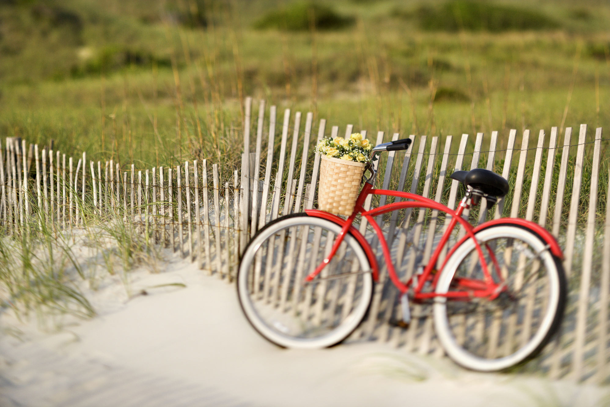 Des vélos pour tous !