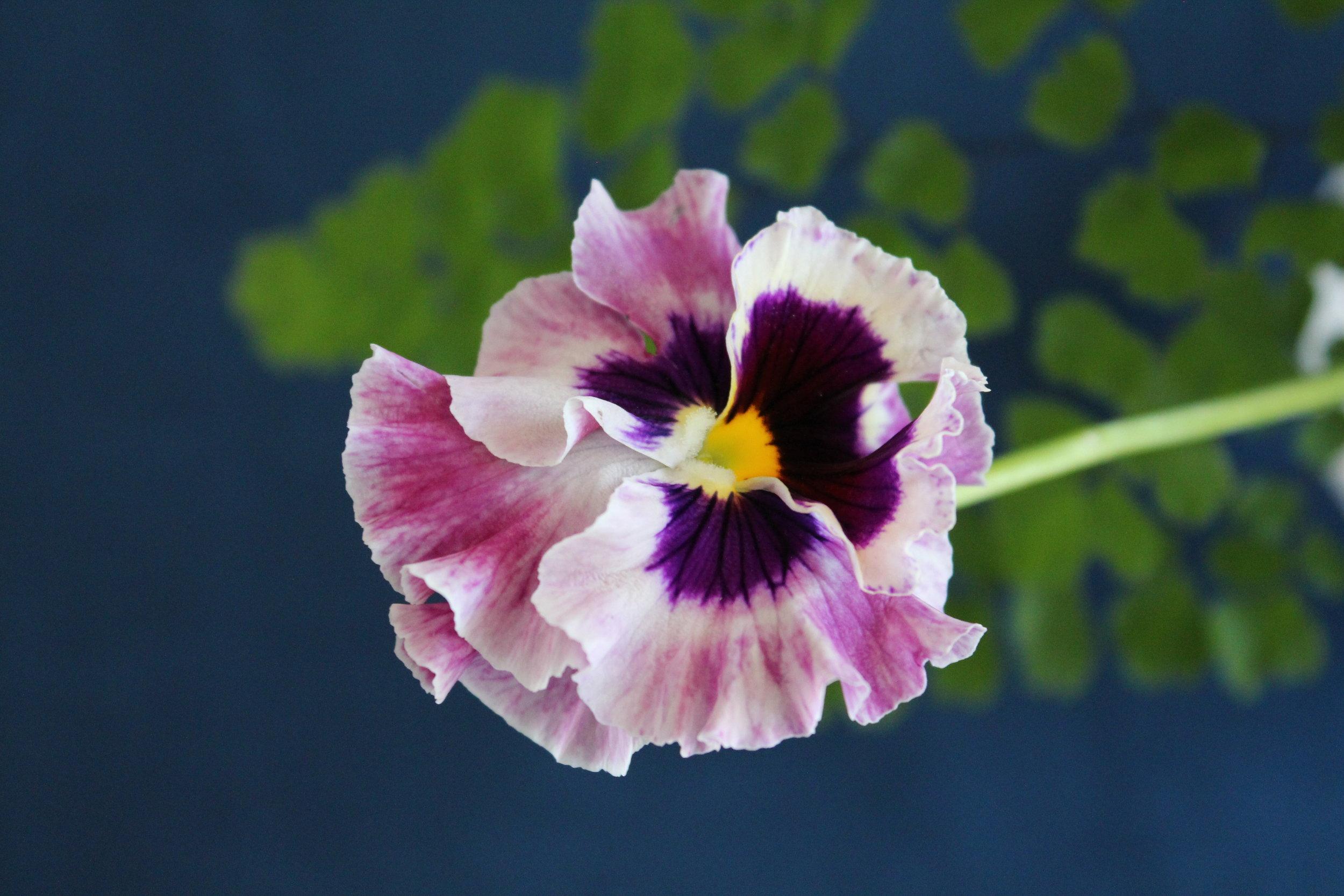 Denise Fasanello Flowers - Floral Studio.jpg