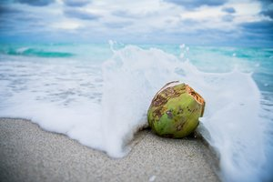 THE MAGICAL POWERS OF COCONUT OIL - June 3rd 2019 - By Ashuni PérezCOCONUTS GIVE US SUPER HYDRATING AND VITAMIN-RICH WATER FROM INSIDE THEIR TOUGH BROWN SHELLS. ALTHOUGH, THE HEALING PROPERTIES OF COCONUT DON'T STOP THERE. COCONUT OIL HAS AMAZING POWERS AS WELL! THIS VISCOUS OIL CAN HELP BOOST YOUR METABOLISM, IMPROVE BRAIN FUNCTION, AND WORK AS A HEALTHY SUBSTITUTE FOR UNHEALTHY FATS. HERE ARE A FEW MORE MAGICAL POWERS COCONUT OIL POSSESSES.SOOTHES SKINCHANCES ARE YOU ARE NO STRANGER TO SEEING COCONUT OIL LISTED AS AN INGREDIENT IN SKINCARE PRODUCTS. IT'S NO SURPRISE AS COCONUT OIL MOISTURISES SKIN, REDUCES WRINKLES, AND EVEN RELIEVES ECZEMA. DAB A BIT OF OIL ONTO ANY TROUBLE AREAS AND LEAVE IT ON OVERNIGHT. YOUR SKIN WILL BE FEELING BETTER BY MORNING.ACCELERATES WOUND HEALINGCOCONUT OIL ALSO HELPS IMPROVE DAMAGED SKIN. YOU CAN USE IT TO HEAL CHAPPED LIPS AND SOOTHE CRACKED HEELS. USE IT AS A SALVE TO TREAT OPEN WOUNDS, BURNS, OR RASHES. FOR EXTRA HEALING POWER, MIX COCONUT OIL WITH ESSENTIAL OILS LIKE LAVENDER, MELALEUCA OR FRANKINCENSE. THESE OILS WORK TOGETHER TO QUICKEN THE HEALING PROCESS.PROTECTS HAIRTHIS SUPER MOISTURISING OIL CAN HELP REPAIR AND SOFTEN HAIR. COCONUT OIL REDUCES HAIR PROTEIN LOSS AND KEEPS YOUR HAIR HEALTHY. NOT TO MENTION, IT CAN HELP COMBAT DANDRUFF WHEN PLACED ON THE SCALP. IT EVEN WORKS TO ELIMINATE FRIZZ AND DE-TANGLE HAIR. COCONUT OIL MIGHT JUST BECOME YOUR NEW HAIR-CARE STAPLE.PROMOTES DENTAL HEALTHCOCONUT OIL'S POWERFUL ANTIBACTERIAL AND ANTI-FUNGAL PROPERTIES MAKE IT PERFECT FOR CARING FOR YOUR TEETH. STUDIES HAVE SHOWN THAT 'OIL PULLING' WITH COCONUT OIL IS AS EFFECTIVE AS RINSING WITH MOUTHWASH. FOR THAT CLEAN MOUTH TASTE, ADD BAKING SODA AND A FEW DROPS OF PEPPERMINT OIL TO THE MIX. YOUR TEETH WILL THANK YOU!PROTECTS FROM SUN DAMAGESPF OCCURS NATURALLY IN COCONUT OIL. IN FACT, SOME STUDIES ASSIGNED IT AN SPF OF 4-7. WHILE THAT'S QUITE LOW, IT IS ENOUGH TO HELP PREVENT SUN DAMAGE AND HEAL SUNBURNED SKIN. BEAR IN MIND THAT YOU DO NEED TO REAPPLY REGULARLY. IF YOU PLAN TO BE IN FULL SUN AT THE HOTTEST TIMES OF DAY, CONVENTIONAL SUNSCREEN MIGHT BE BEST.FIGHTS CANDIDAIF YOU'RE A WOMAN, YOU'VE PROBABLY HAD A YEAST INFECTION BEFORE. THE TREATMENTS THAT YOU PURCHASE AT A PHARMACY CAN BE HARD ON YOUR VAGINAL ECOSYSTEM. COCONUT OIL IS A GREAT NATURAL ALTERNATIVE. ITS ANTI-FUNGAL PROPERTIES WORK JUST AS HARD TO KILL CANDIDA AS OTHER COMMONLY PRESCRIBED CREAMS.HELPS WITH HOUSEHOLD CHORESFANS OF CLEVER LIFE HACKS MAY ALREADY KNOW THAT COCONUT OIL HELPS SAVE TIME AND EFFORT IN THE HOME. YOU CAN USE IT TO REMOVE STAINS AND WASH CLOTHES NATURALLY. COCONUT OIL CAN EVEN SHINE YOUR FURNITURE AND POLISH YOUR SHOES. IN A PINCH, THIS OIL ALSO HELPS UNSTUCK CHEWING GUM AND UNZIP STUCK ZIPPERS.THE TAKEAWAYCOCONUT OIL WORKS LIKE A MAGIC WAND TO SOLVE A VARIETY OF PROBLEMS. FROM SKINCARE TO HEALTHCARE, THIS OIL HAS GOT YOU COVERED. TRY SOME OF THESE USES FOR COCONUT OIL TODAY AND SEE FOR YOURSELF!SHOP: NAPHTALYWORLD COCONUT SHELL CANDLE