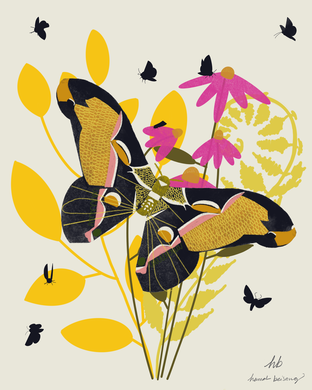 Coneflower_Moth.png