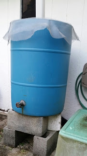Meet My Rain Barrel