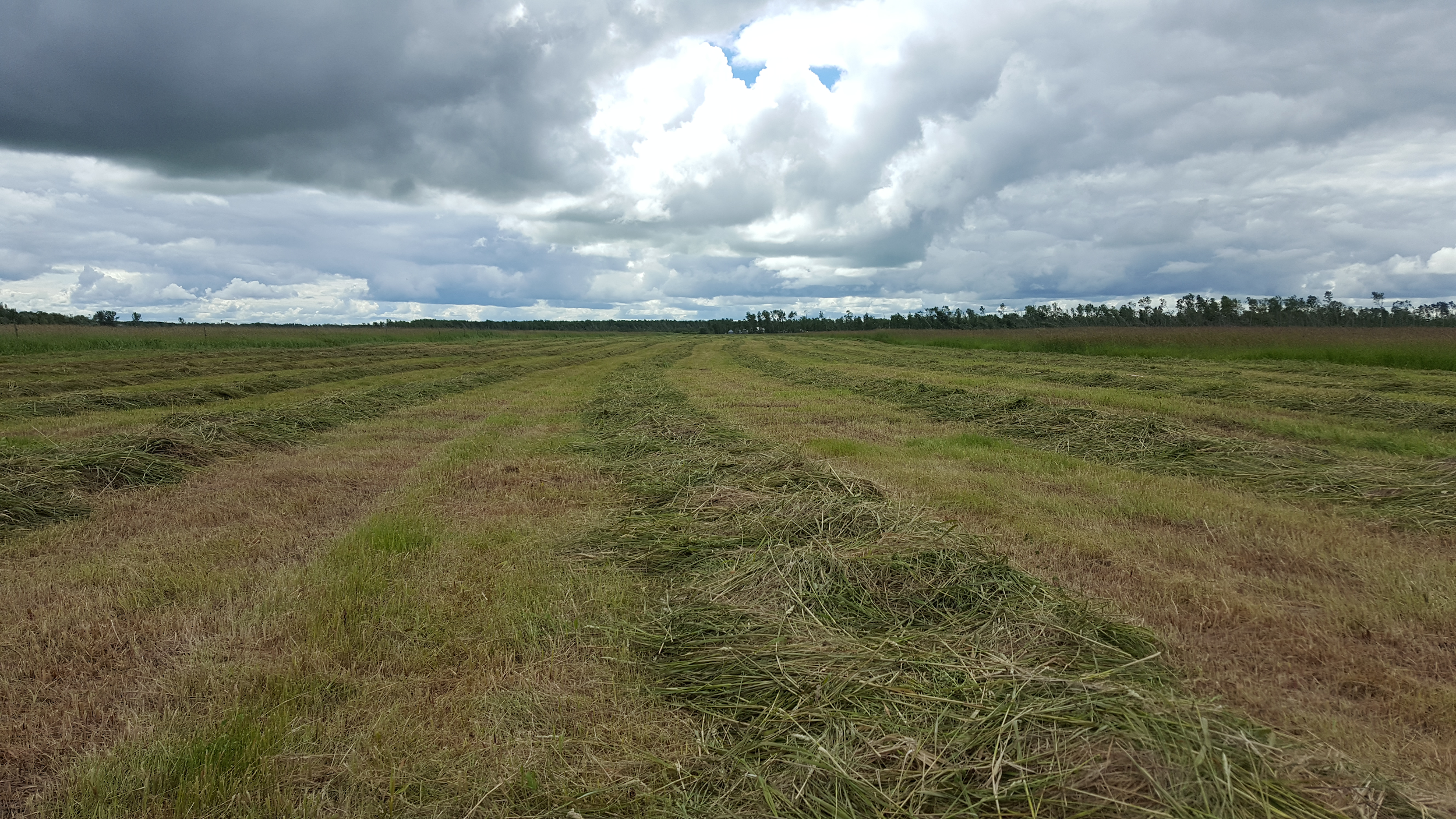 The cheapest way to deal with salinity - put it in hay