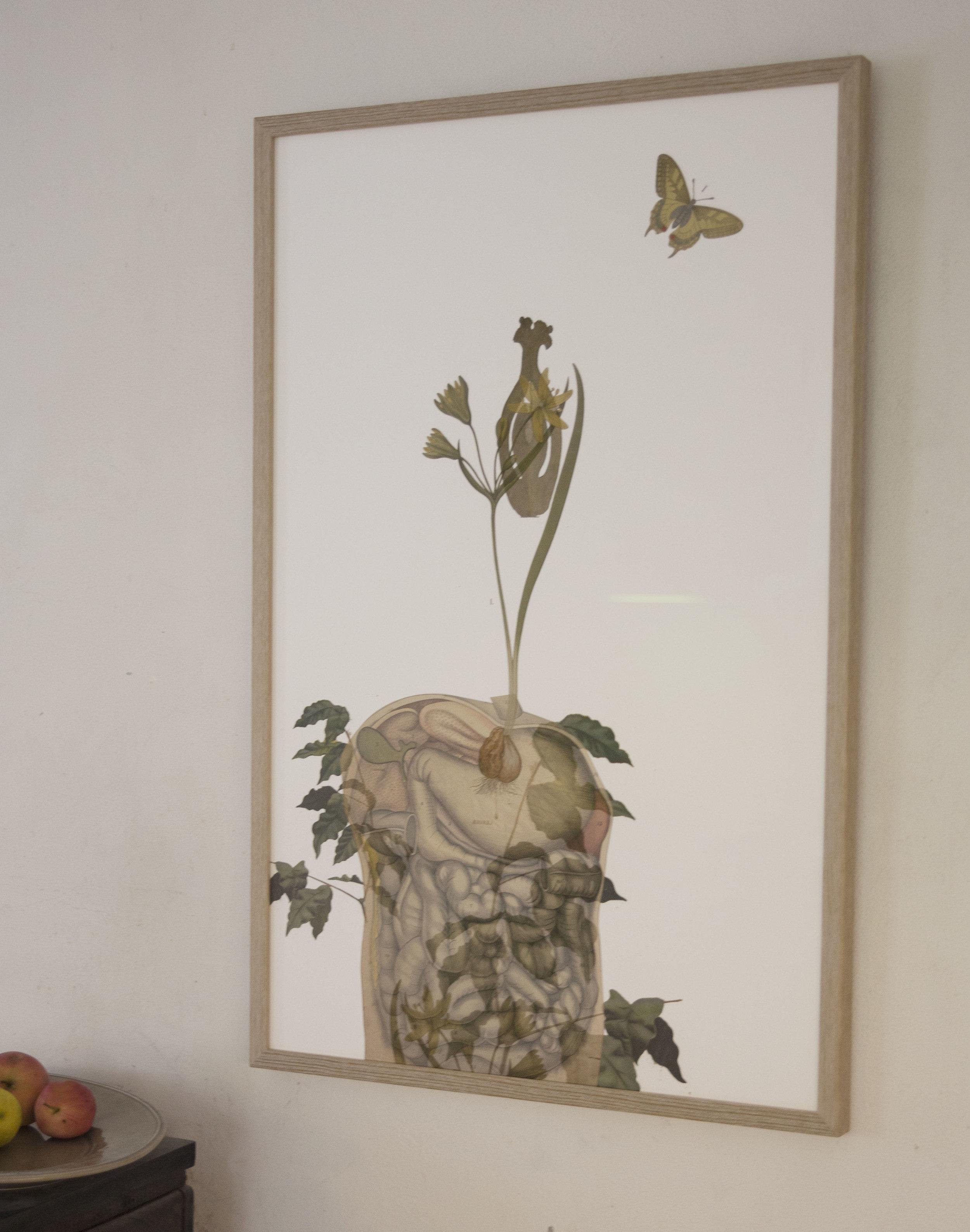 sommerfugl.jpg