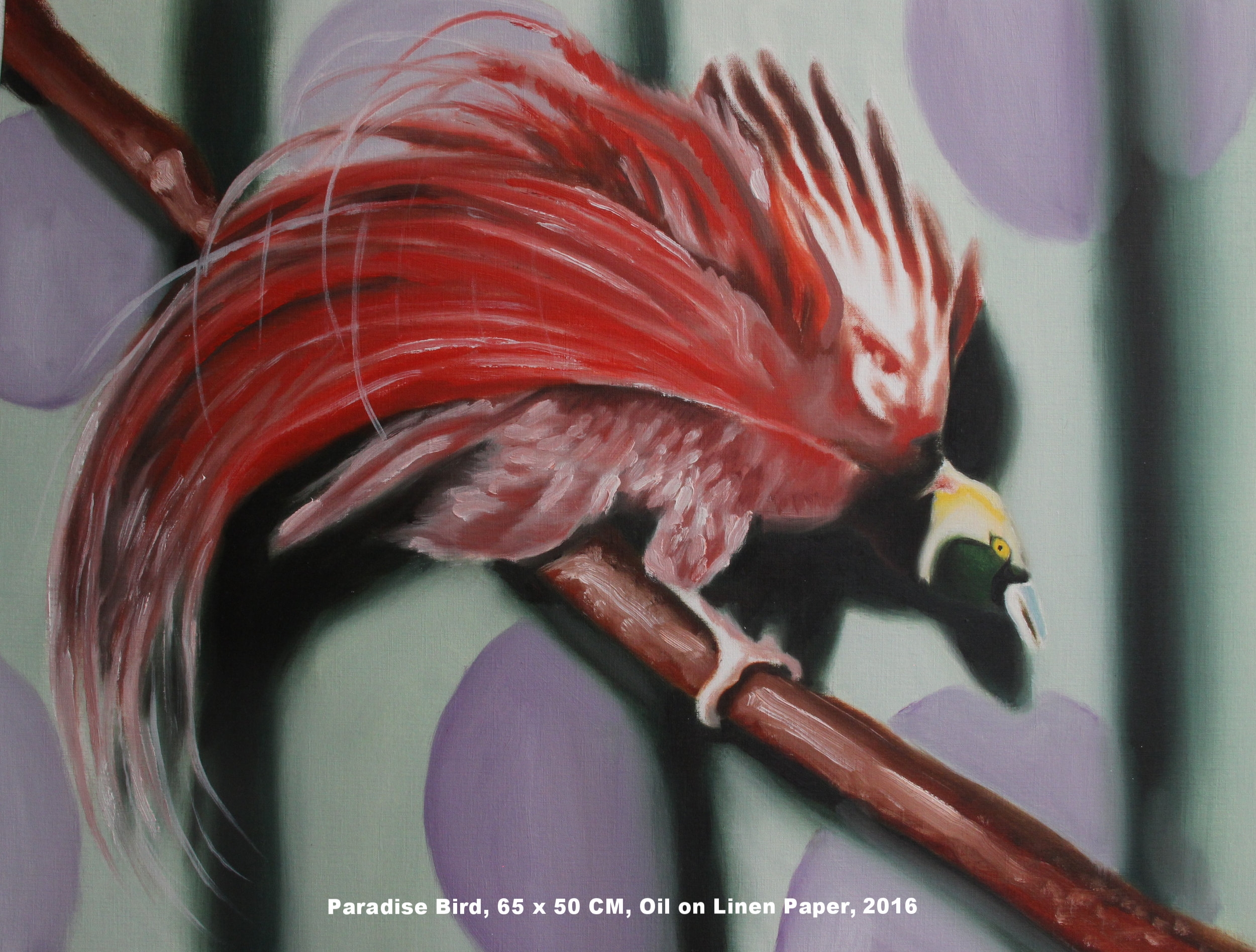 Greater Bird of Paradise.jpg