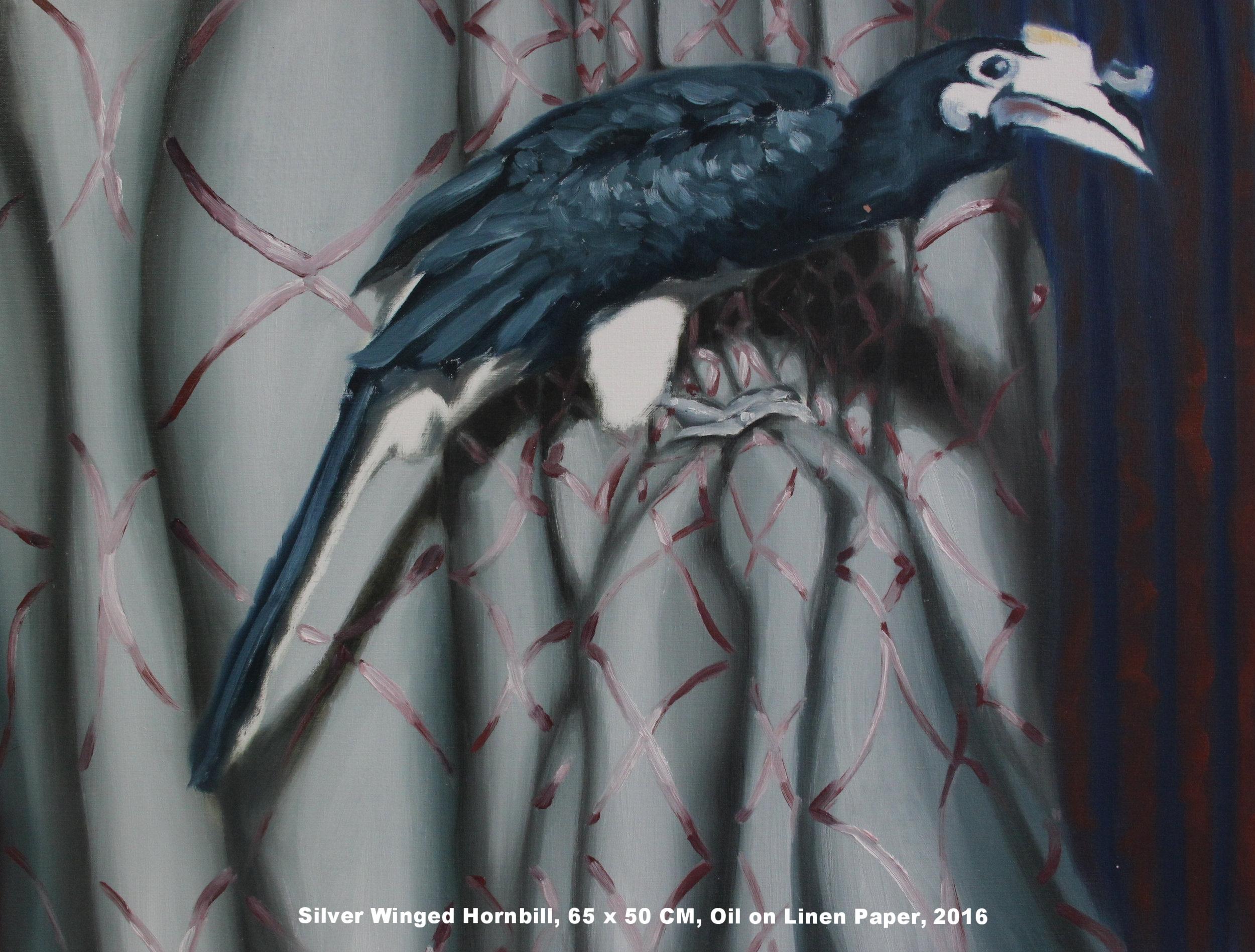Silver Winged Hornbill.jpg