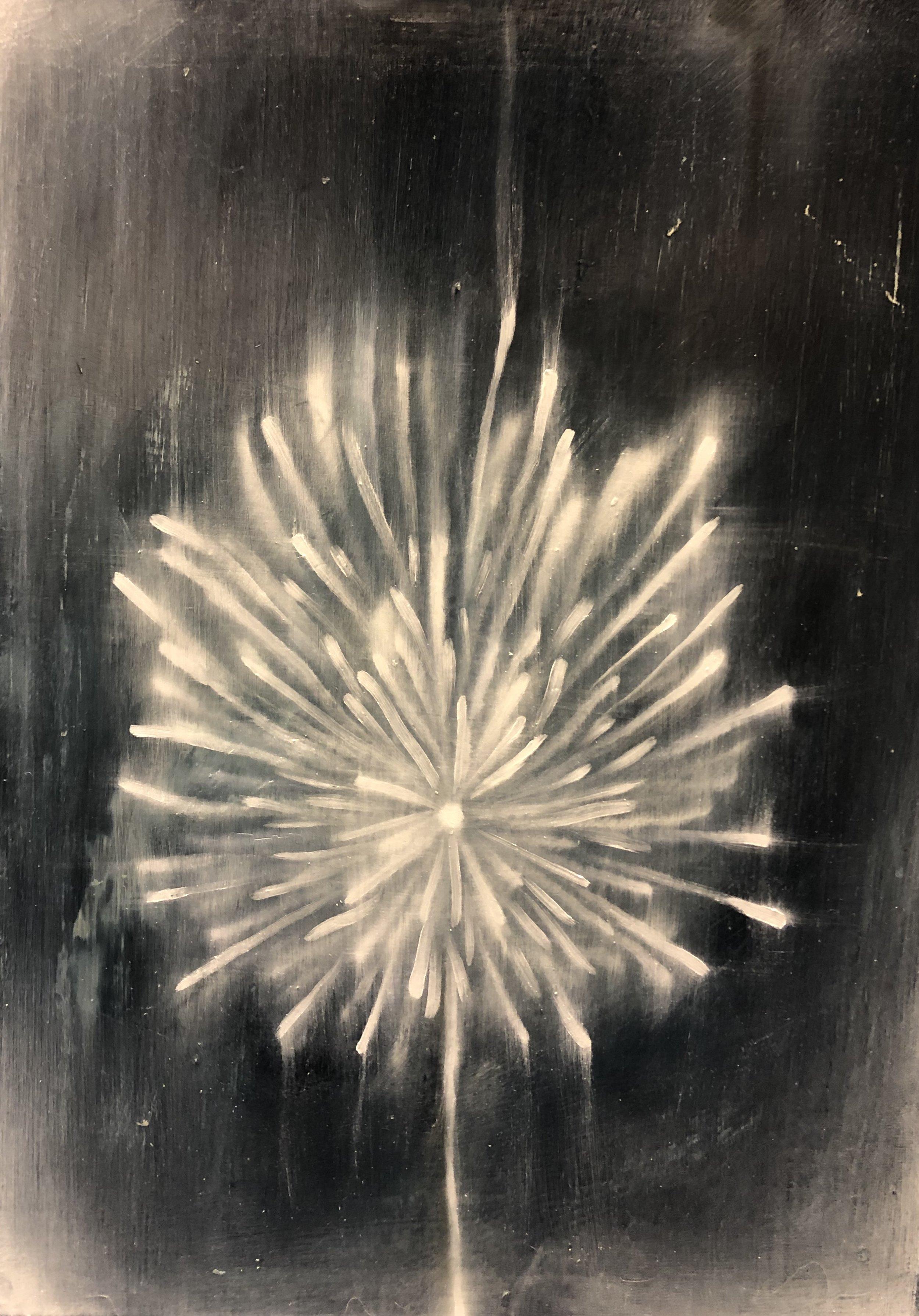 Dandelion #3, 70 x 50 CM, 2019