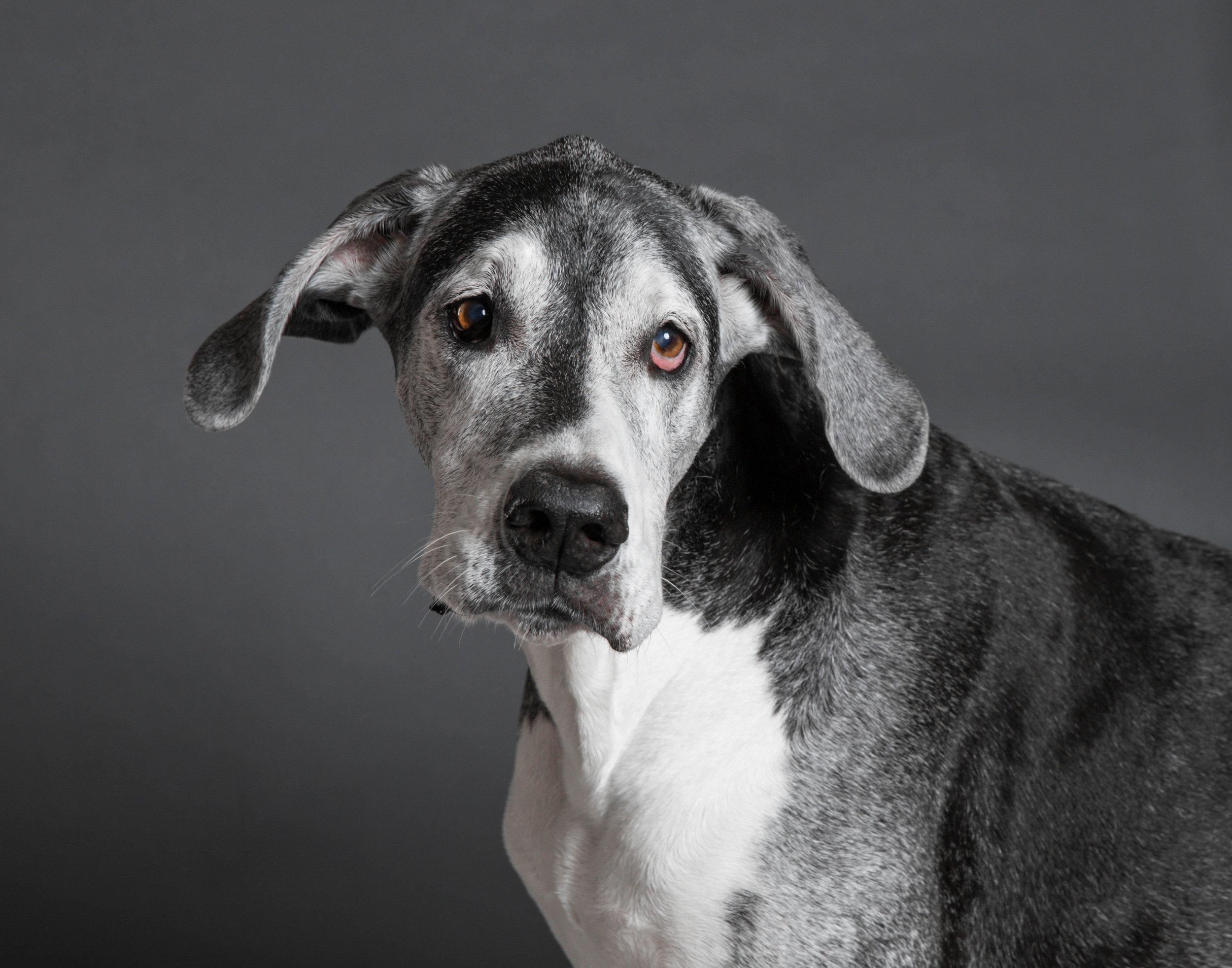 5 star dogs 11x14-3.jpg