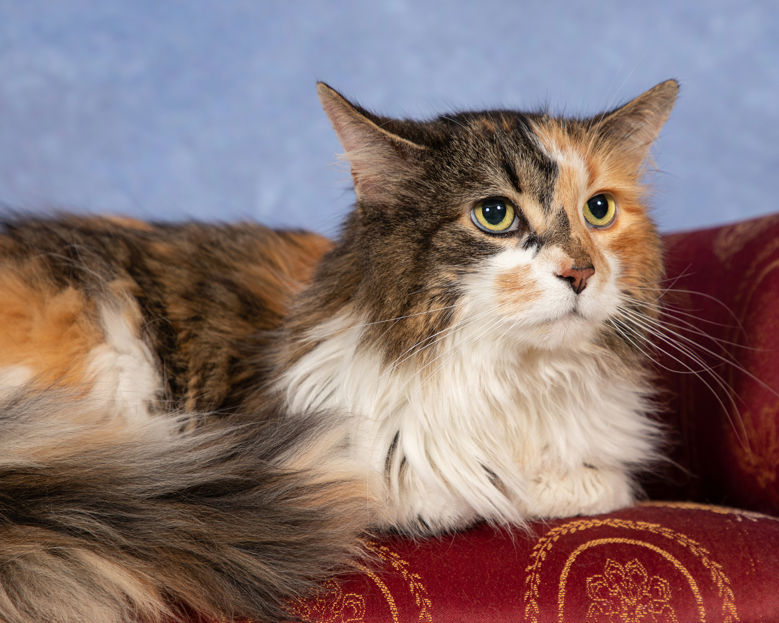 From our SPCA Calendar Photoshoot