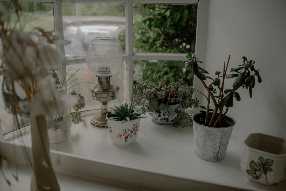 succulent on windowsill