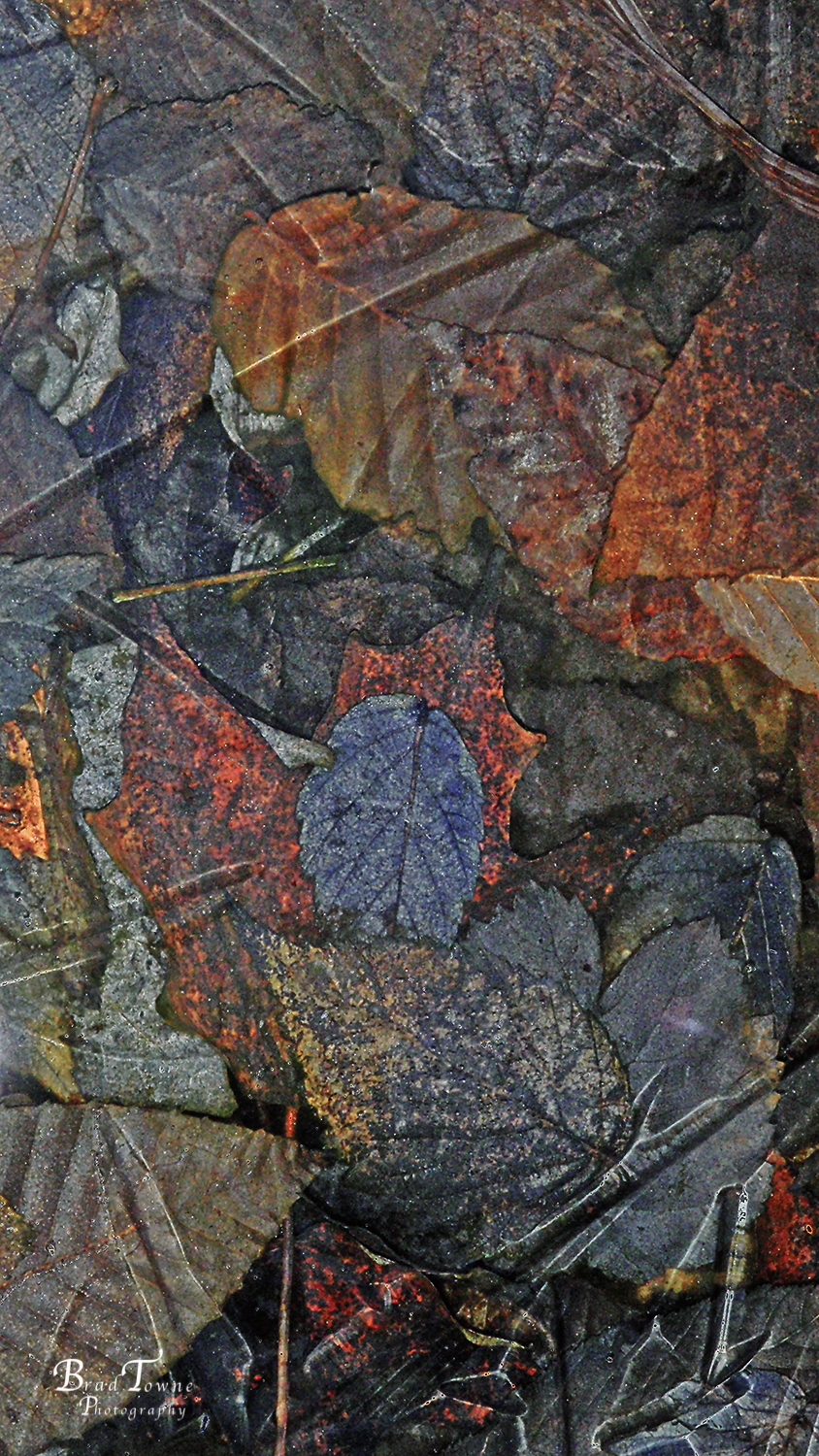 "Sample of accepted entry in the 40th Annual Jack Parfitt Juried Photography Exhibition ""Iced Leaves"" by Bradford Towne"