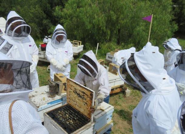 Beekeeping Class 101.jpg