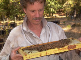Randy oliver - scientific beekeeping