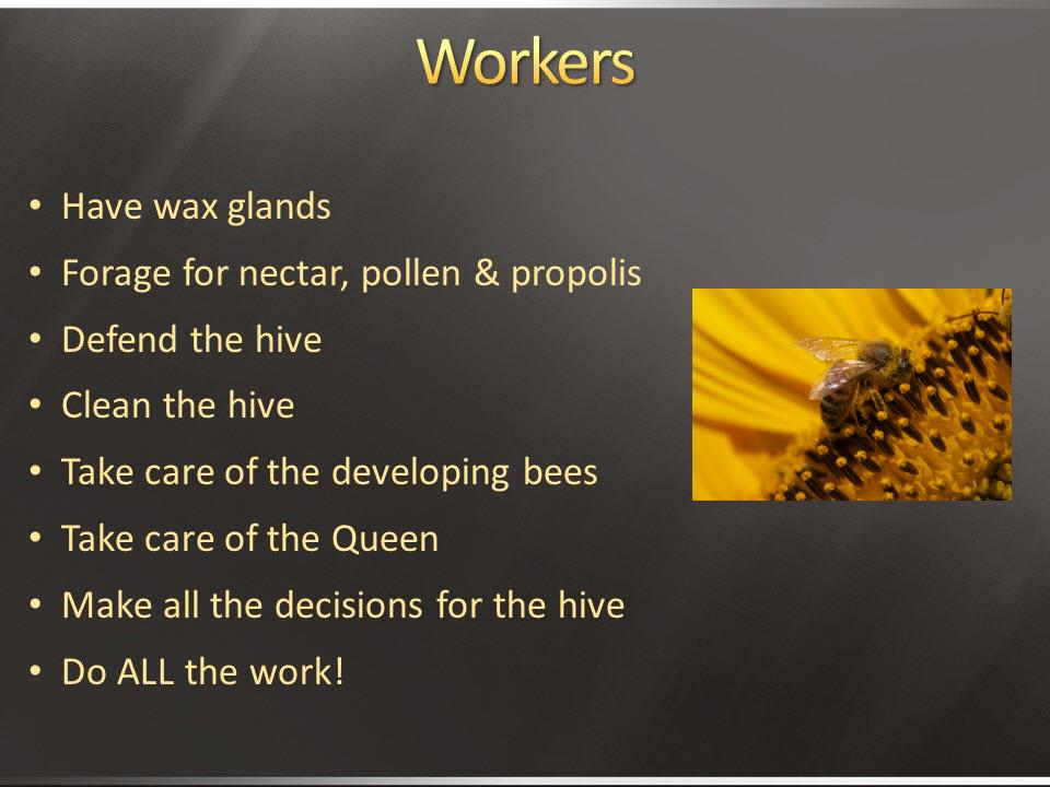 lacba worker bees.JPG